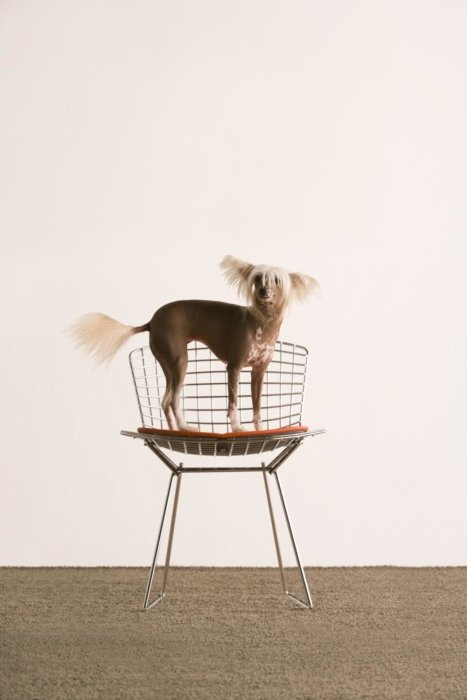 Dog standing on chair