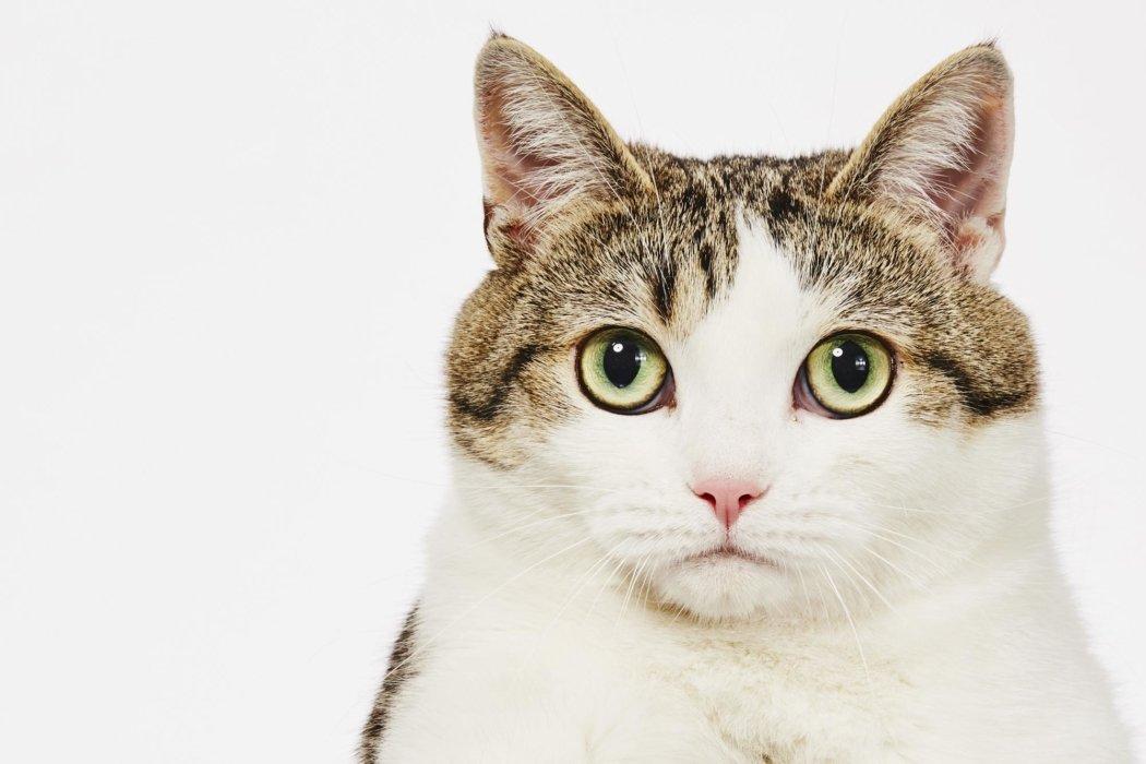 Cat close up portrait