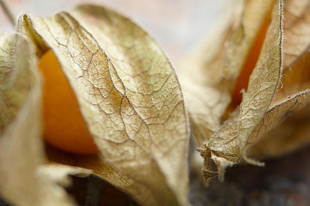 Raw orange fruit with leaves