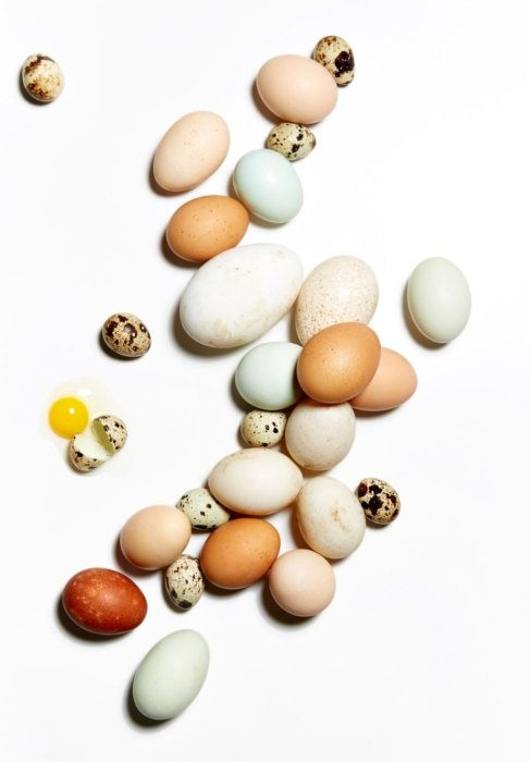 A variety of animal eggs