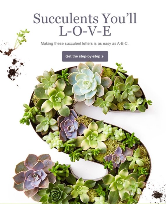 Succulents on a advertisement