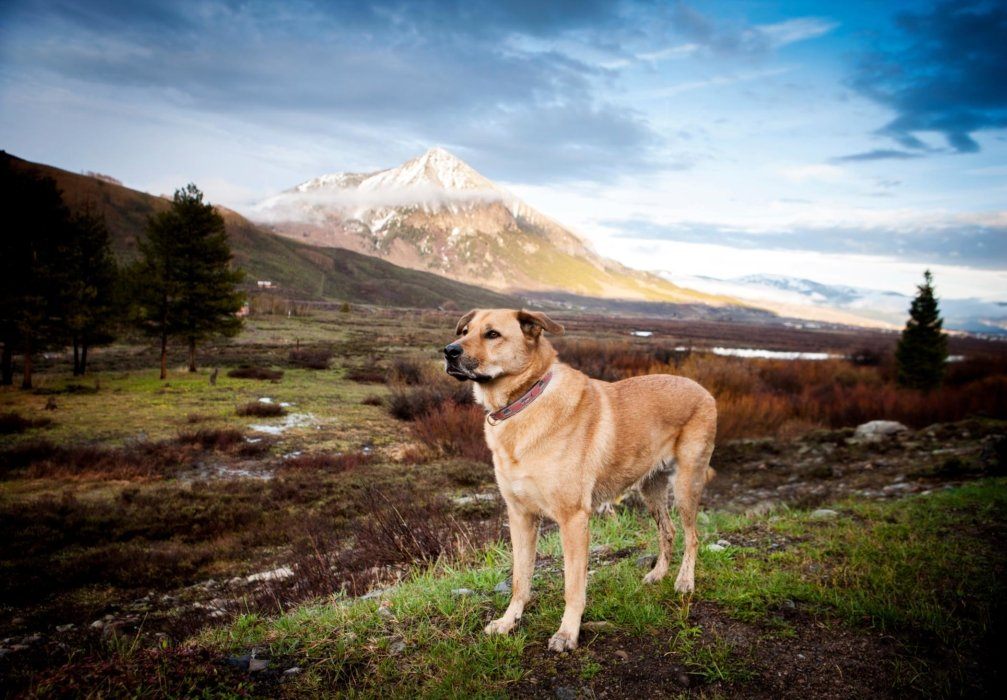 Dog in nature with a mountain in the background