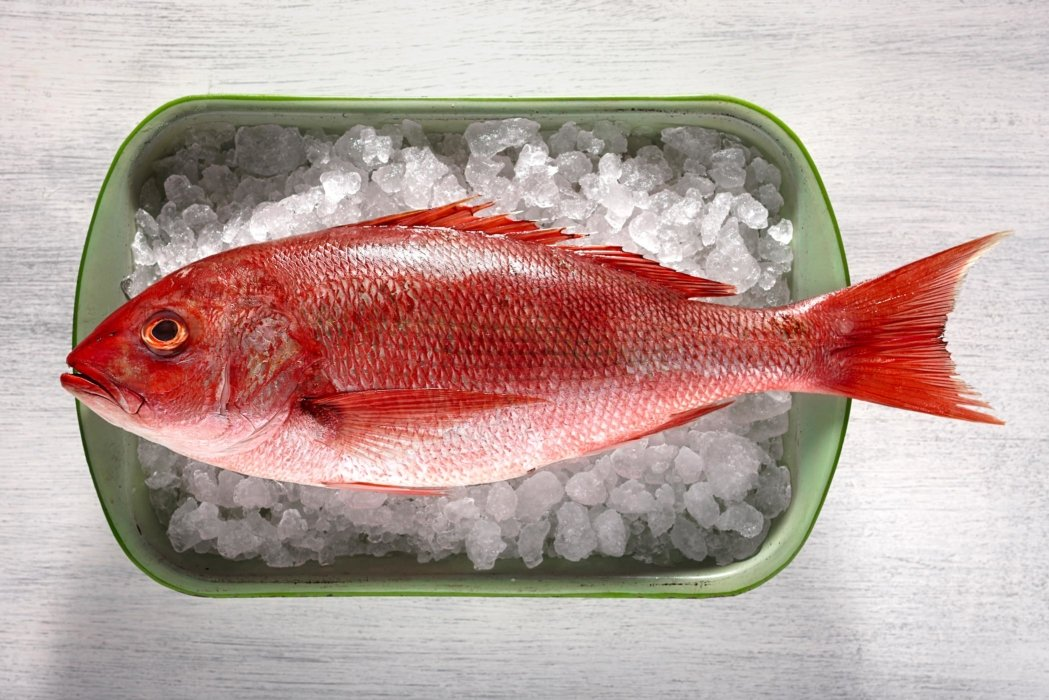Raw red snapper on ice in a green dish