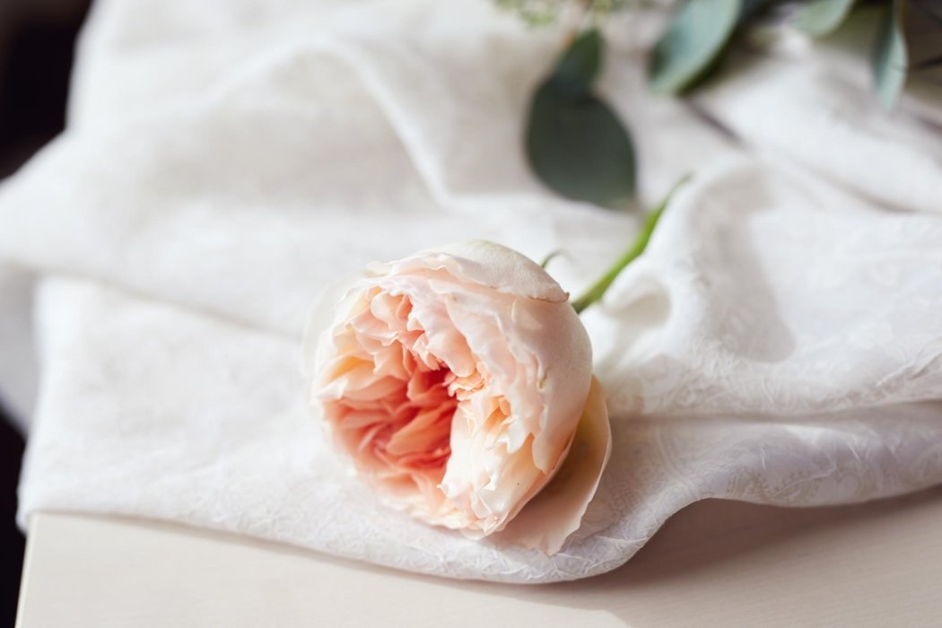 a single pink flower on a white cloth