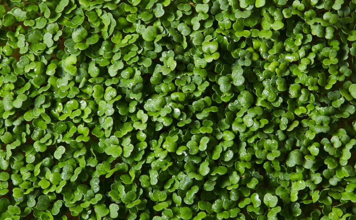 micro greens close up - Raw Food Photography