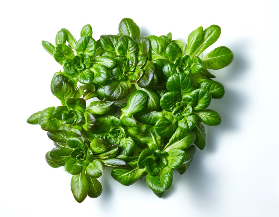 Fresh raw greens on a white background - Raw Food Photography