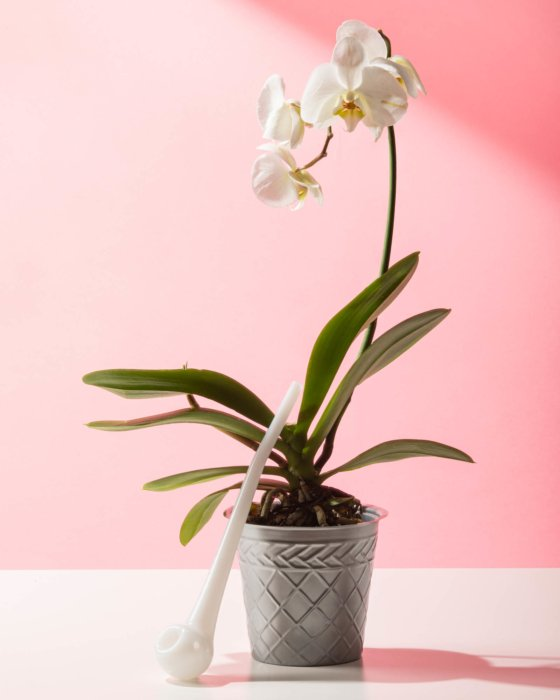 White ceramic pipe next to Orchid cbd photography