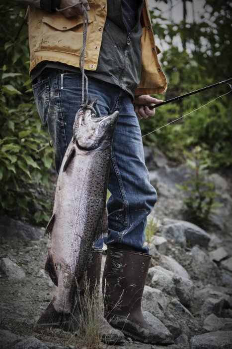 A fisherman with a huge salmon fish on a stringer