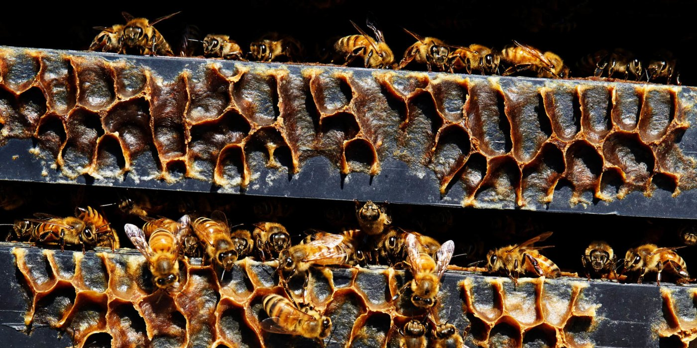honeycomb outside textures surrounded by bees