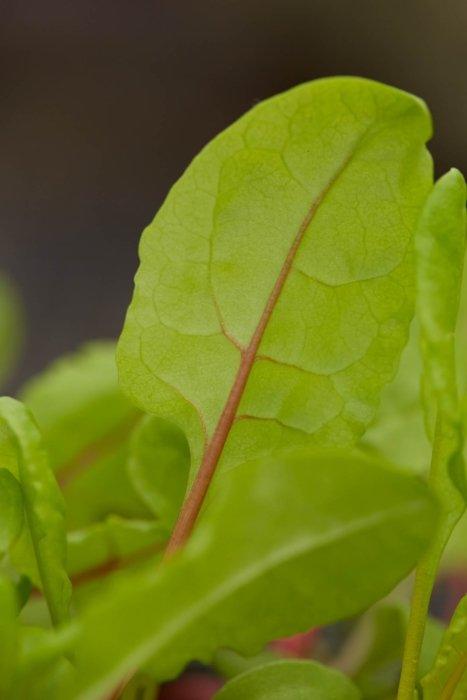 Fresh green food grown on a farm