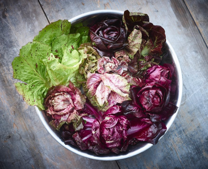 Mexico inspired editorial food photography - raw cabbages and leafy greens