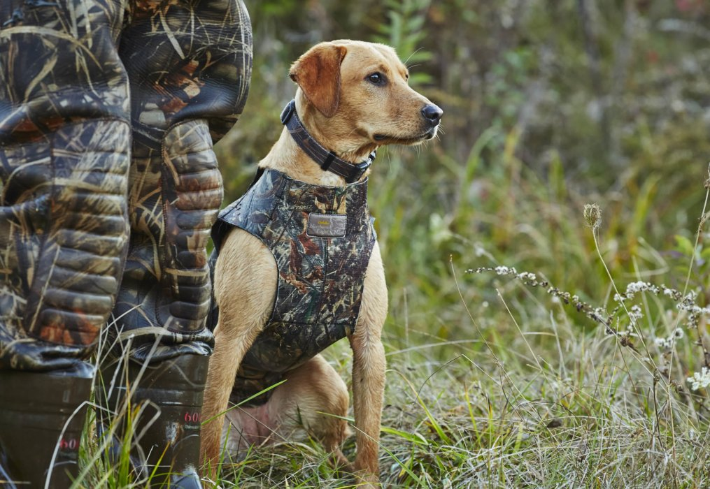 A hunting dog standing next to his hunter