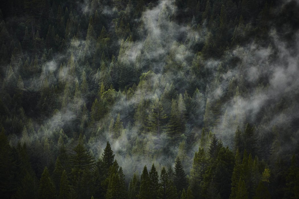 A misty pine forest mountain side - travel
