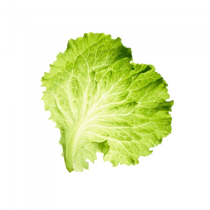 Fresh raw lettuce on white - food photography